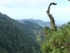 Riesige Flächen unzerstörten Regenwaldes