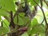 Faule Tiere im Baum