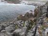 The Burren - Irlands Kartsregion