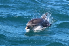 Dolphin Viewing Tour